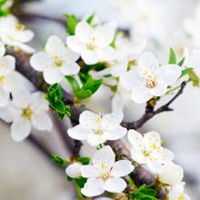 Υγιή φυτά,<br/>λουλούδια<br/>και λαχανικά